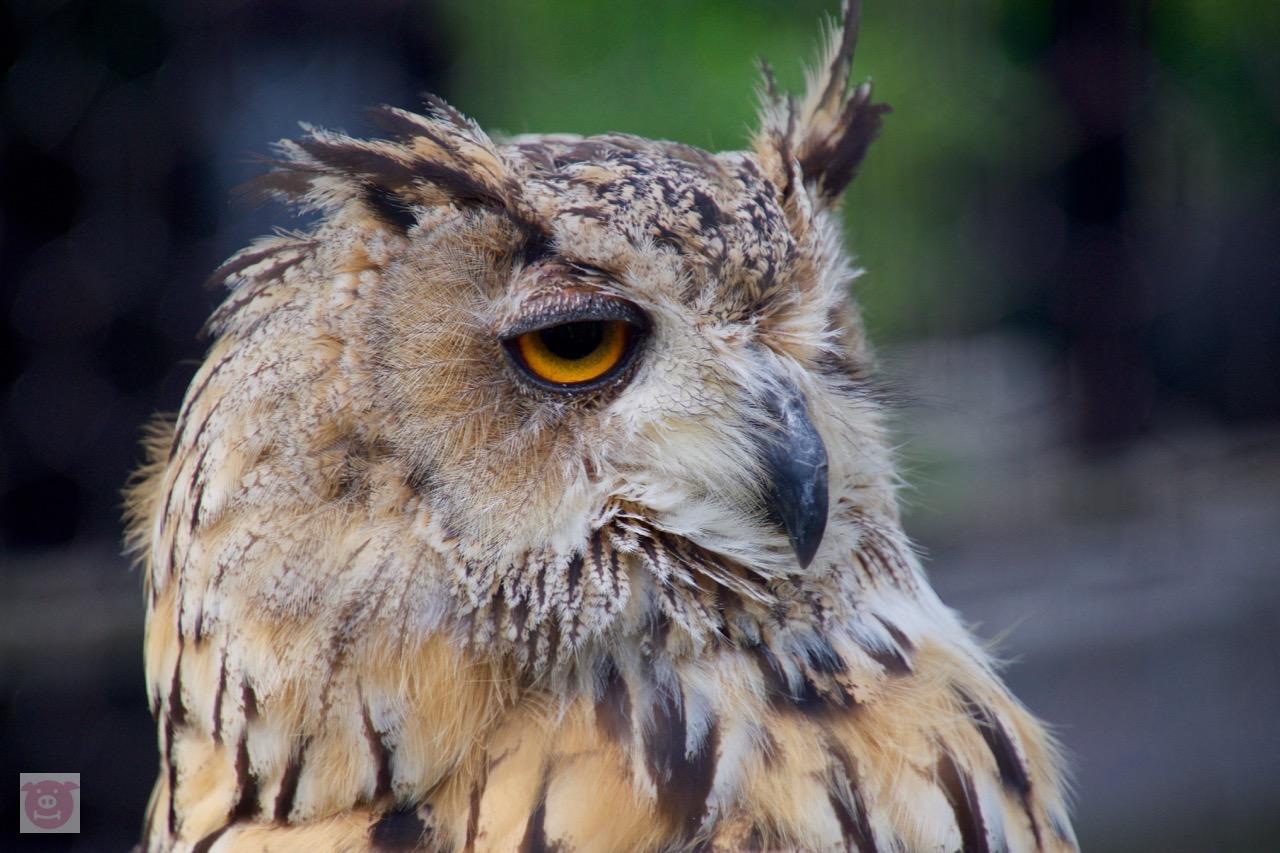 TAMRON 高倍率ズームレンズ 16-300mm レビュー@旭山動物園 換算450mmでライオンの近くに寄れる
