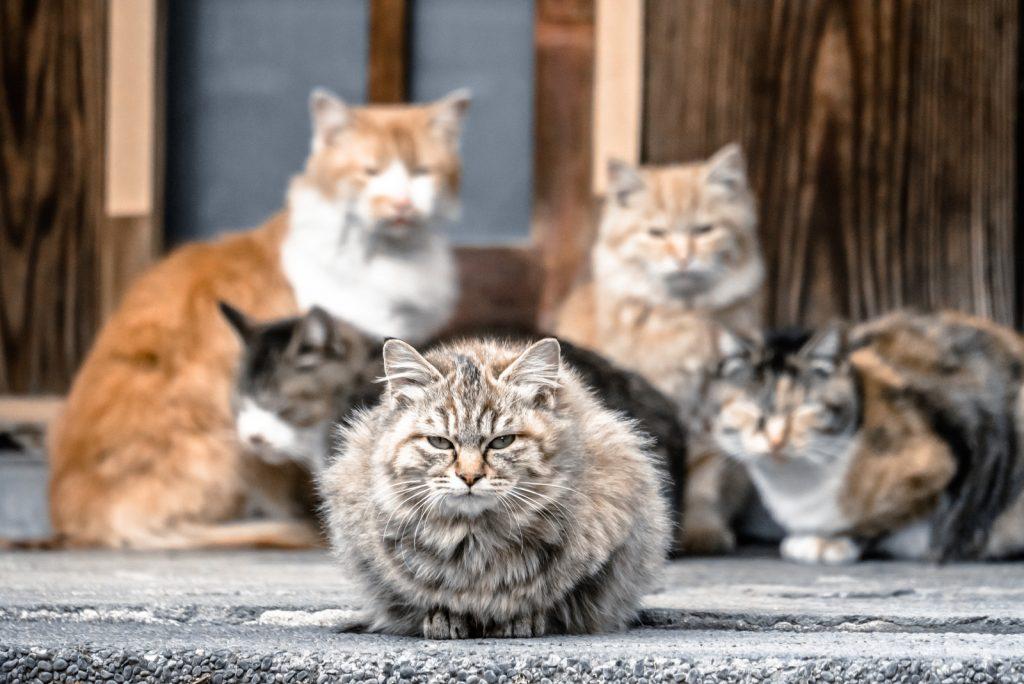 ネコが集まっている写真