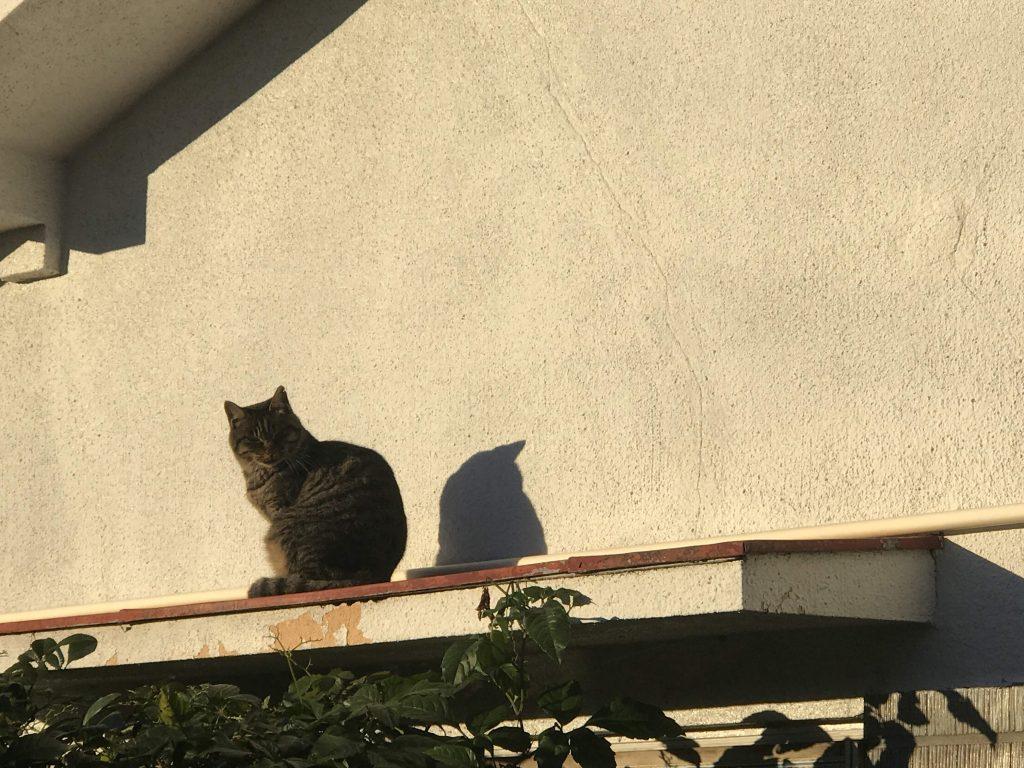 猫 宇都宮